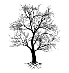 hand drawn old tree silhouette vector image vector image