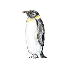 penguin hand drawn vector image vector image