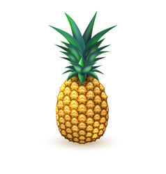 pineapple realistic summer exotic fruit isolated vector image