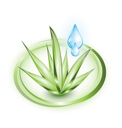 Aloe vera plant with water droplets vector image
