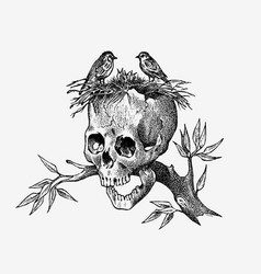 human skull on a branch with birds retro old vector image