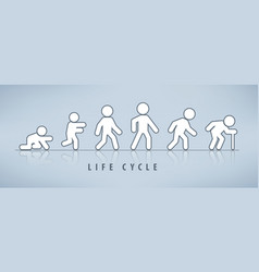 Life cycle and aging process vector