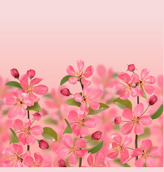 pink blossoming cherry branches with bokeh effect vector image