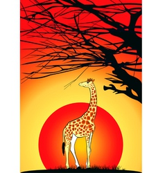 giraffe sunset vector image