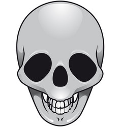 gray skull vector image vector image