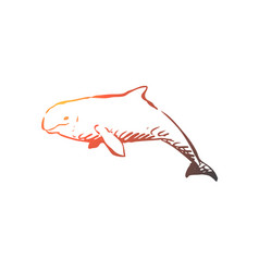 beluga sea water wildlife hausen concept hand vector image