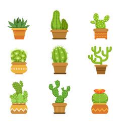 Botany decorative plants in pots cactus vector
