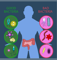 Medical infographic intestinal flora gut health vector