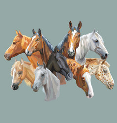 set of horses breeds vector image
