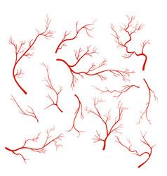 Set veins and vessel red vector