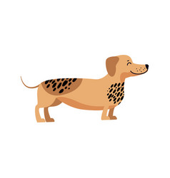 dachshund filled with energy vector image