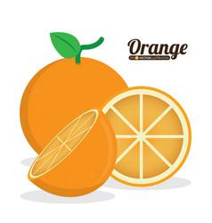Citrus fruit vector