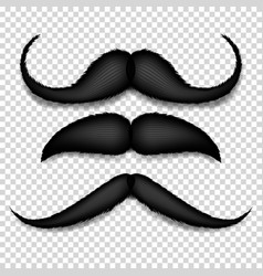 mustache isolated black vintage moustache vector image