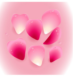 pink rose petals with drops water vector image