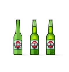 Beer bottles isolated on white vector image