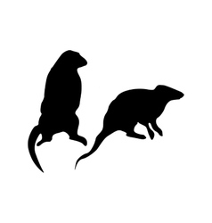 Meerkat black silhouette vector