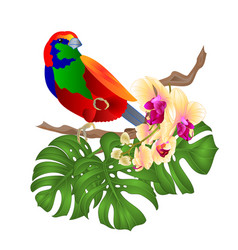 tropical bird and beautiful yellow orchid vector image