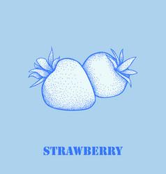 garden strawberry fruit or strawberries vector image