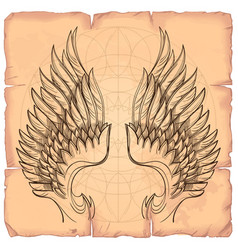 Wings on background old paper design vector