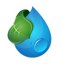 a drop of water and green leaf vector image