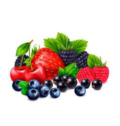 Bunch of berries composition vector