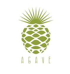 Design template agave plant vector