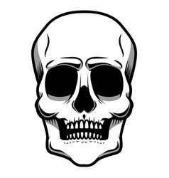 human skull isolated on white background design vector image