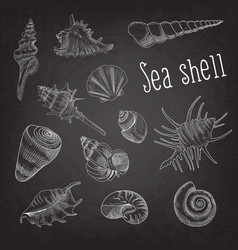 Seashells hand drawn aquatic doodle on blackboard vector