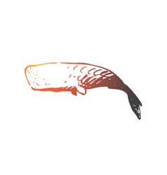 sperm whale ocean wildlife marine cachalot vector image