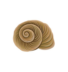 Spiral-shaped shell of sea snail marine theme vector