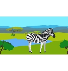 Zebra in the field with green grass horisontal vector