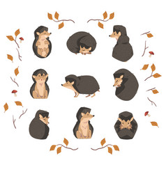 Cute little hedgehog collection lovely wild vector