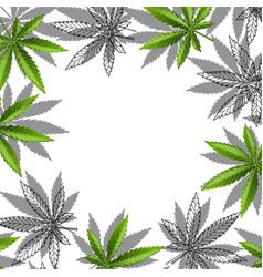 green cannabis leaf drug marijuana herb background vector image