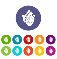 human heart organ icons set color vector image