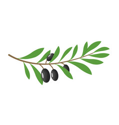 Olive branch tree isolated leaf olive food green vector