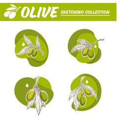olive oil labels stickers and logo in sketching vector image
