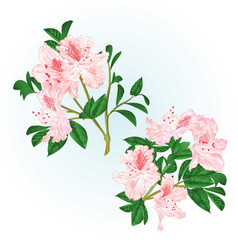 Shrub light pink rhododendrons twigs with flowers vector