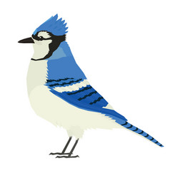 Blue jay bird wildlife isolated object vector