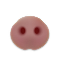cute nose of pig head of little piggy vector image