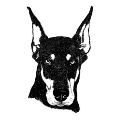 Doberman pinscher dog portrait in vector