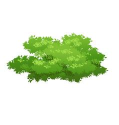green bush image vector image