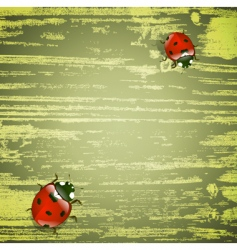 spring ladybirds vector image