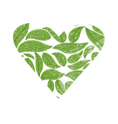 drawing green leaves shape heart vector image