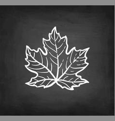 chalk sketch maple branch vector image