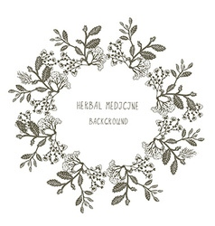 Herbal medicine label or frame sketchy design with vector image