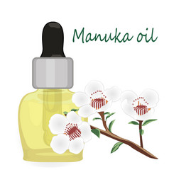 manuka essential oil vector image