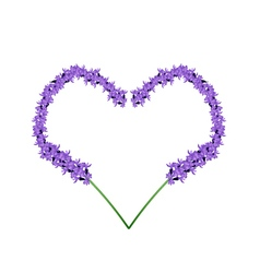 Purple Lavender Flowers in Heart Shape Frame vector image