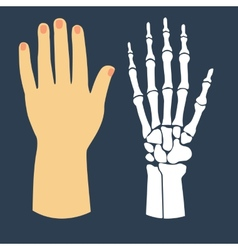 The flat design of the hand and the hand skeleton vector