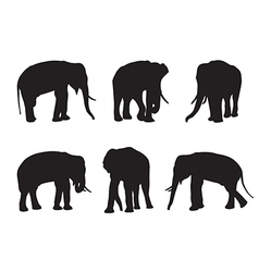 Elephant Set Silhouettes on the white background vector image