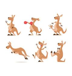 Kangaroo tropical wild animal from vector